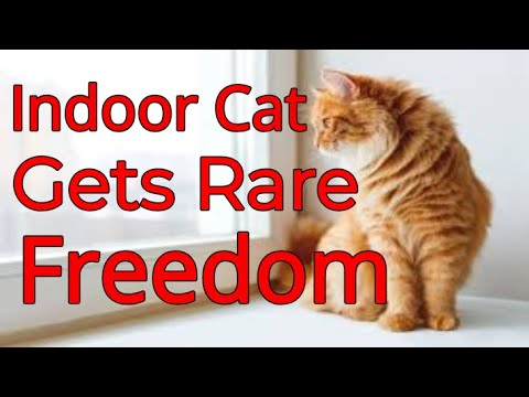 indoor-cat-makes-the-most-of-his-rare-freedom