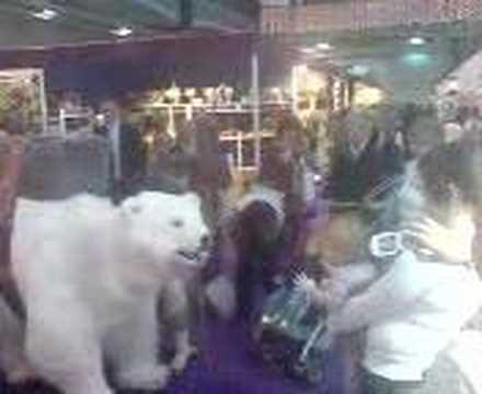 Polar Bear at Spirit of Christmas Fair