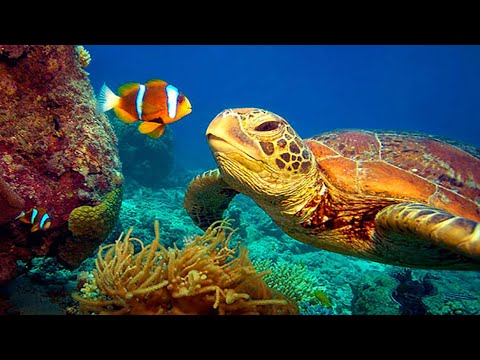 11 HOURS Stunning 4K Underwater footage + Music | Nature Rel