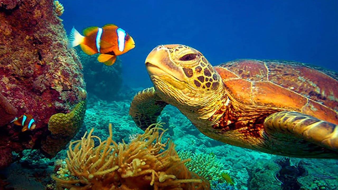 11 HOURS Stunning 4K Underwater footage + Music | Nature Relaxation™ Rare & Colorful Sea Life Vi