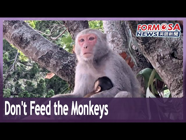 Don't feed the macaques, pleads Taroko National Park administration