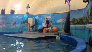 Морские котики в дельфинарии   Уфа