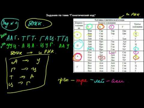 Как работать с таблицей генетического кода