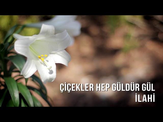 Müziksiz İlahiler - Çiçekler Hep Güldür Gül