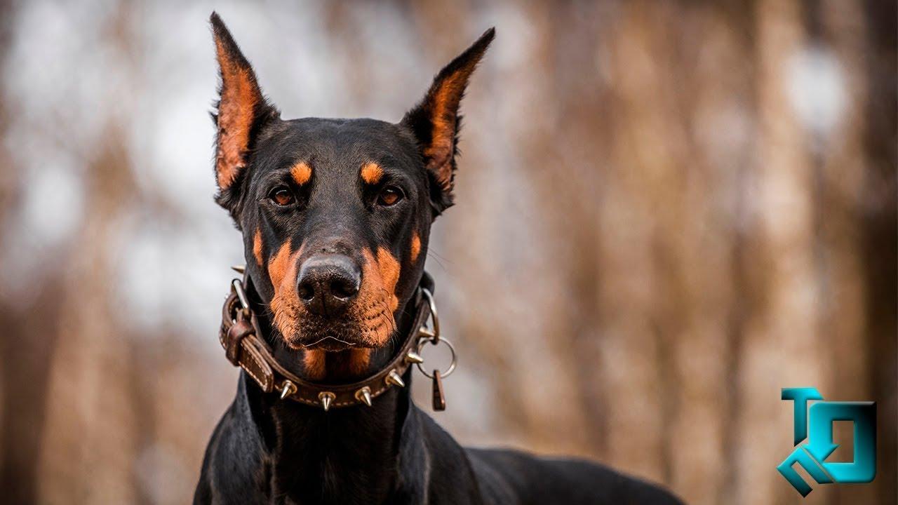 самые умные собаки в мире
