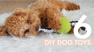 6 Easy DIY Dog Toys your dog will love! | Zuko Toy Poodle