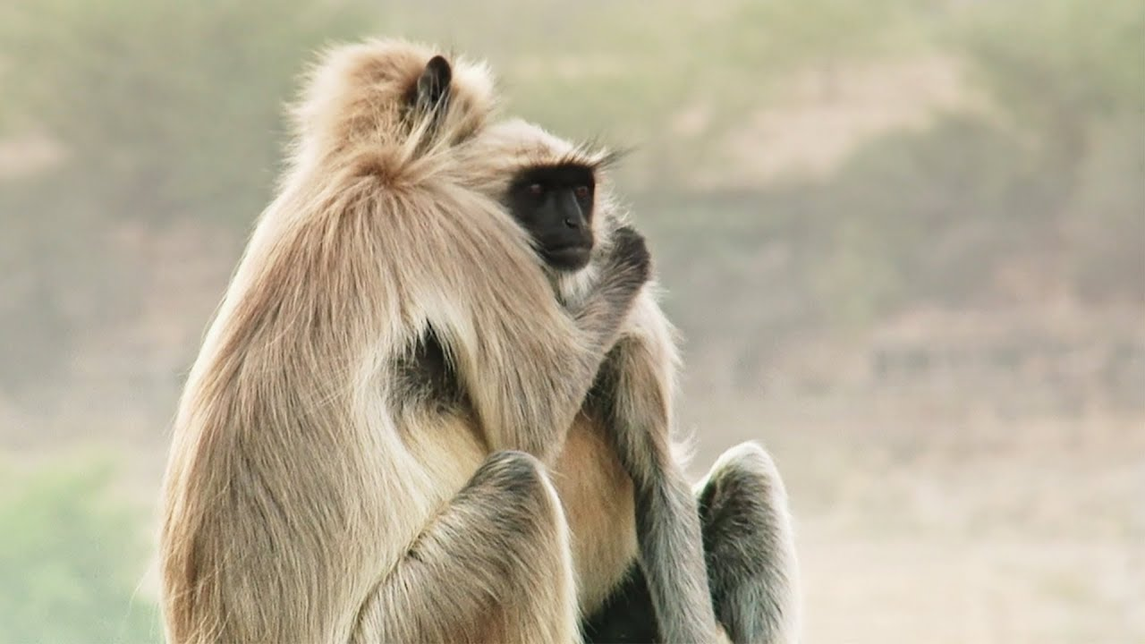 Best Of Wild Animals Caught On Spy Cam Bbc Earth Youtube