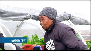 Hydroponic farming taking over Joburg's rooftops