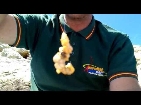 Anzuelado de un muergo SIN CASCARA (Navaja-Longueiron-Razor clam-Cannolicchi)