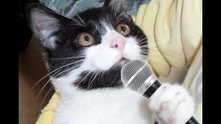 Кошка поет Буратино!  Кошка жжет! Я в шоке! Нереальные вокальные данные!