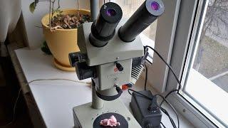 Мікроскоп МБС-10, Microscope MBS-10