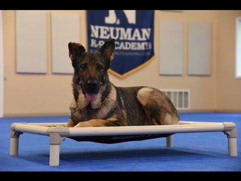 Weike - German Shepherd Dog
