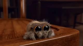 Lucas la araña (es muy kawaii)