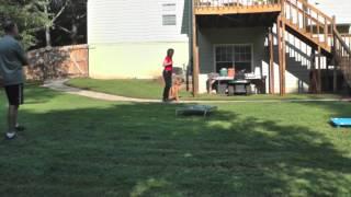 Boxer - Sit Up N Listen Dog Training