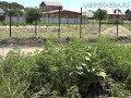 Борьба с сорной и карантинной растительностью.