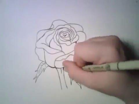 Cách vẽ Hoa hồng đơn giản