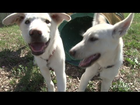 Special: Castanet's Pets of the Week