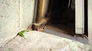 3年前の真夏の暑い日に、裏庭で見つけた迷子のフェレット。とりあえず...