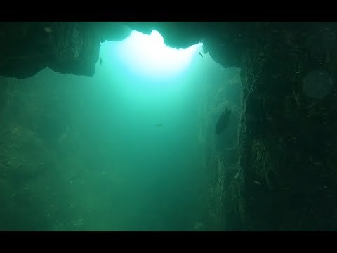 OCEAN STATE OF MIND: Spearfishing Rhode Island (WATCH IN HD)