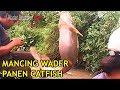 Gak nyangka MANCING WADER  malah panen catfish, Puntius binotatus , Rasbora, micro fishing