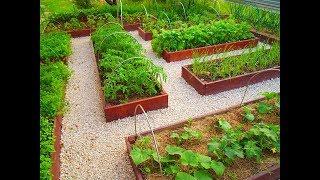 Огород по-новому