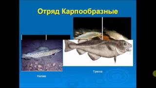 видео Виды промысловых рыб
