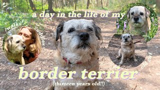 a day in the life of my border terrier!!  (13 yrs old)