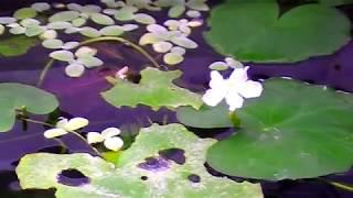 Цветы аквариума