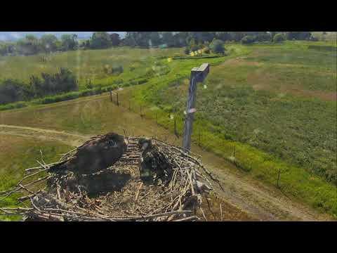 Osprey Nest - Charlo Montana Cam 07-22-2017 09:33:20 - 10:33:20