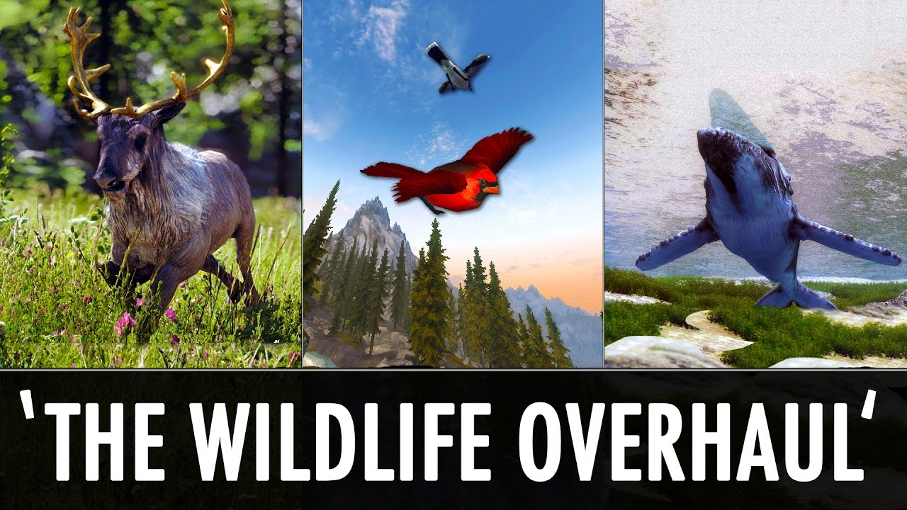 Skyrim Mods: 'The Wildlife Overhaul' - Land, Sea & Air