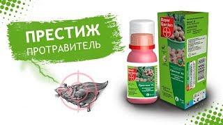 видео Престиж от колорадского жука: инструкция по применению