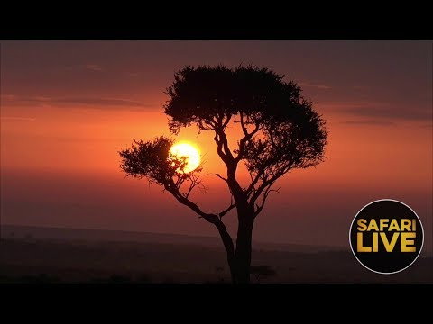 safariLIVE - Sunrise Safari - December 22, 2018