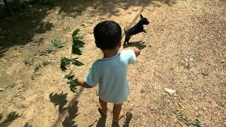 Baby play with dog back | baby videos | Baby video clip | baby Activity