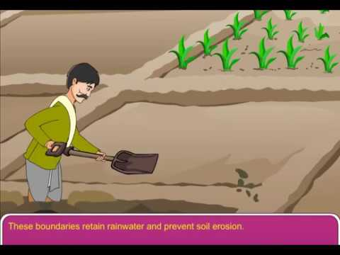 Methods to prevent Soil Erosion