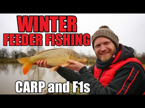 WINTER FEEDER FISHING  - Feeder Fishing For Carp And F1s With TINY FEEDERS | Rob Wootton