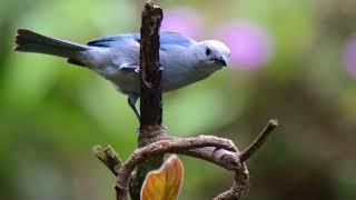 Entrevista al ornitólogo Gary Stiles: efectos del cambio climático en las aves