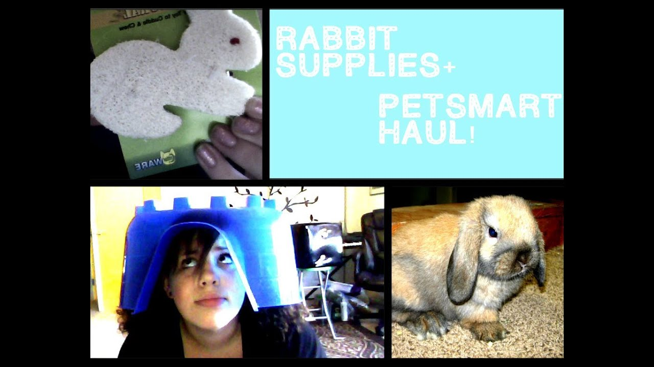 What you need when you get a rabbit + Huge PetSmart bunny haul!
