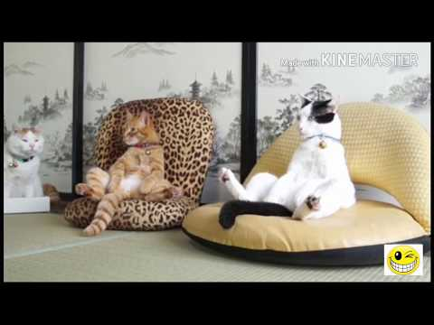 Funny cats video | Died laughing with the humor of the cat, Try not to laugh ( Part 4)