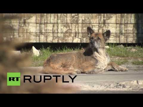 Russia: Sochi's stray dogs have a new home