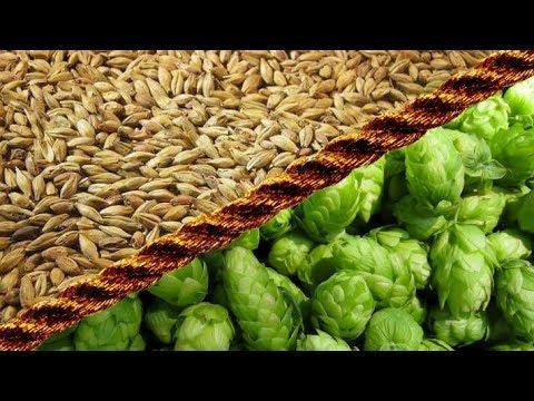 Fajowe piwo #4 Słód i Chmiel