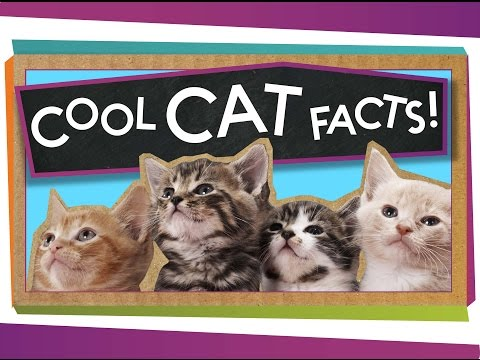 3 Cool Facts About Cats!