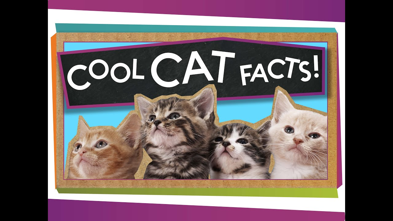 3 Cool Facts About Cats