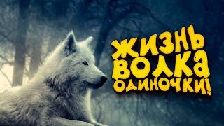 Я ВОЛК! - ТАК ПРОХОДИТ МОЙ ДЕНЬ! - WolfQuest