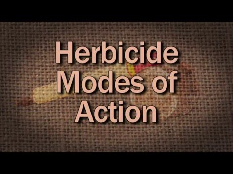 Herbicide Modes Of Action - Family Plot