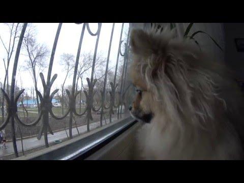 Интернет магазин зоотоваров и кормов для животных в Москве
