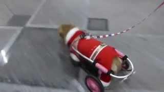 シャンシャンシャン♪元気いっぱいの車椅子サンタクロース