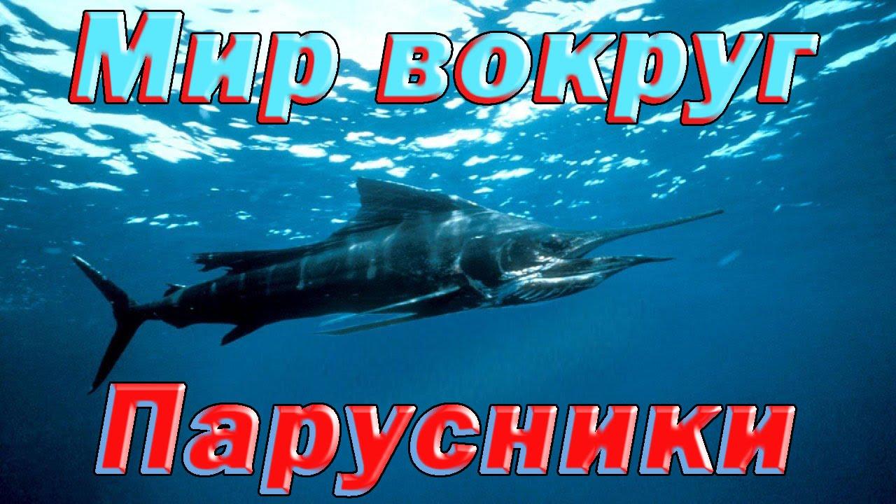 Парусники. Самые опасные животные.  Морской мир HDTVRip720p