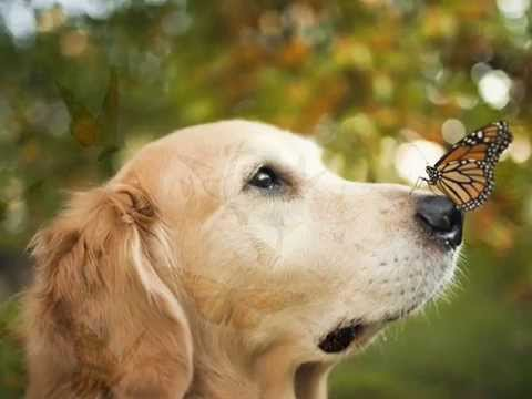 how to play dog and butterfly