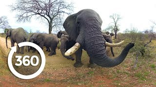 Elephants on the Brink | Racing Extinction (360 Video)