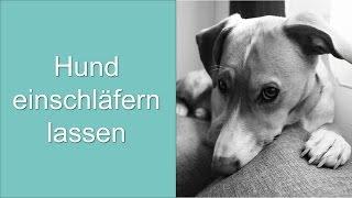 Hund einschläfern lassen